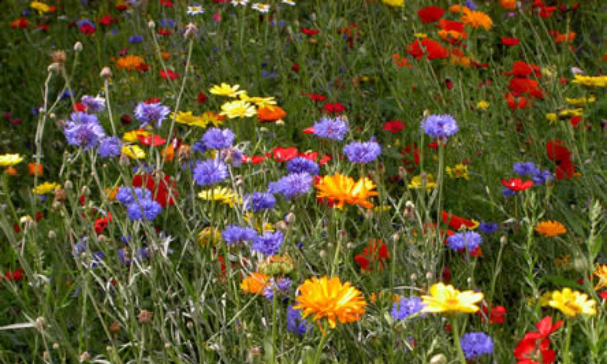 Over Bijen en Bijenbloemen
